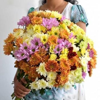 50 Stems of Chrysanthemum
