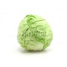 Cabbage (முட்டைக்கோஸ்) 500g