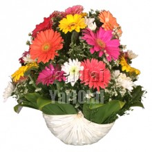 Gerberas  Mix flowers  in Palmera leaf wrap