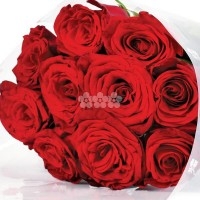 Sheaf of 10 Red Roses